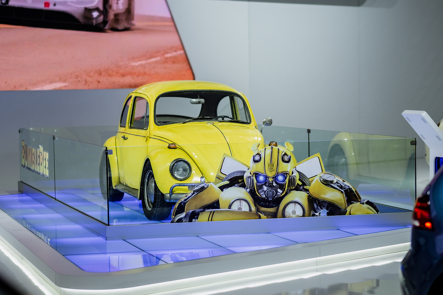 Bumblebee | Photo: Olivier Delorme